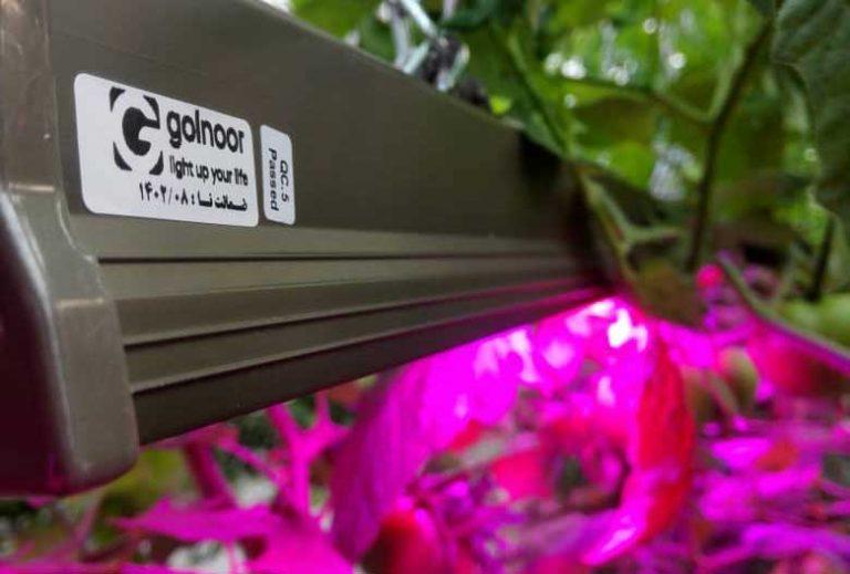 استفاده از نور مصنوعی در گلخانه هیدروپونیک برای اولین بار در کشور